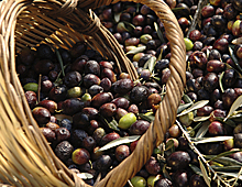 The Olive Basket
